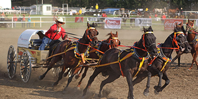 Westerner Pony Chuckwagon Tarp Auction